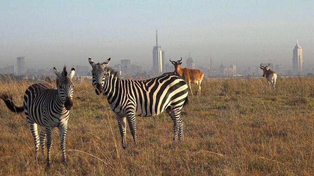 Spotting Zebras from Dar es Salaam to Nairobi